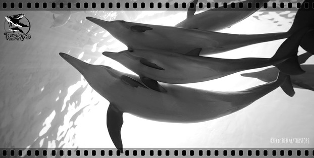 video dauphins suivis