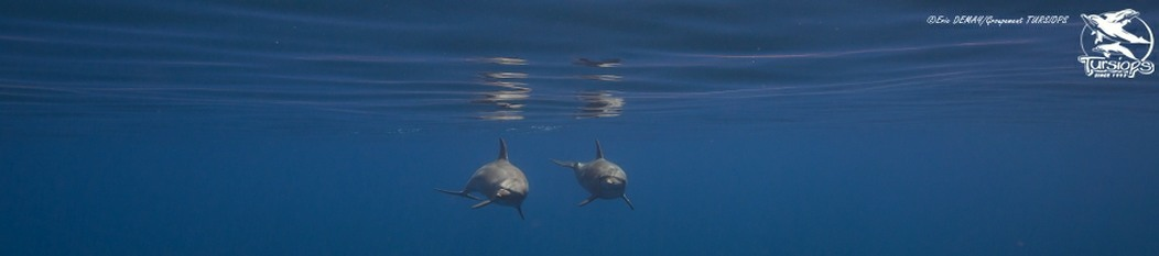 specialiste scientifique comportemens dauphins