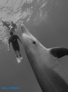 dauphins mer rouge rencontres immersion
