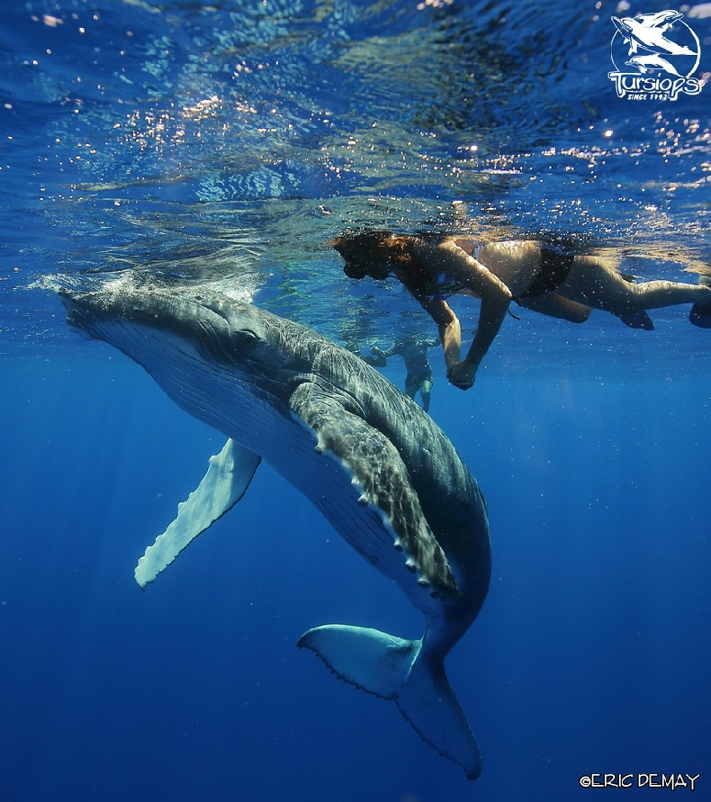 informations about dolphins and whales